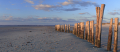 Panoramic view of weathered wooden posts on the beach in evening light at East Head, West Sussex.